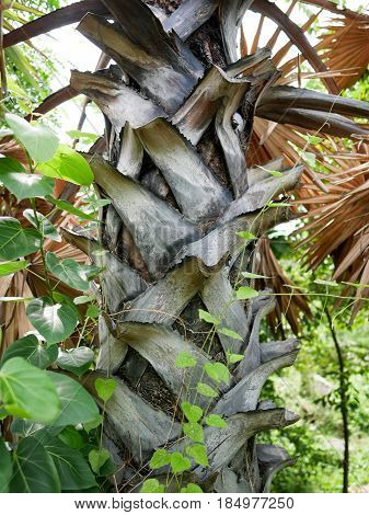 Closeup palm trunk in the middle of green vines.