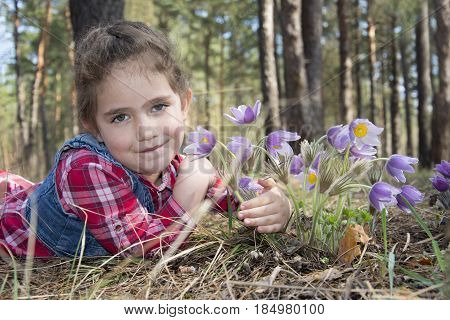 In the forest in the spring a little girl lies on the ground and hugs the flowers to pasque-flower.