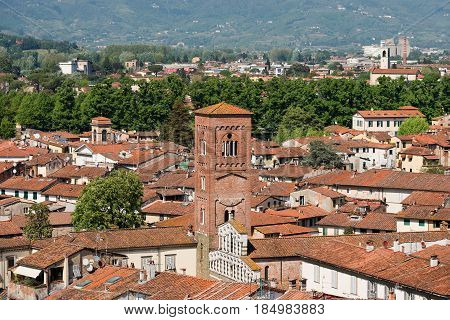 Aerial view of the medieval town of Lucca Toscana (Tuscany) Italy with the church of San Pietro Somaldi. View from the Guinigi tower