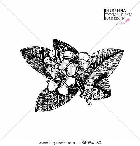 Vecotr hand drawn tropical plant icons. Exotic engraved leaves and flowers. Isoalated on white. Plumeria frangipany flowers and leaves on twig. Vintage style illustration. Use for exotic beach, wedding, partty