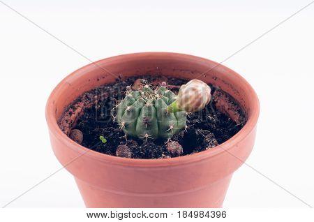 Cactus In Brown Ceramic Pot