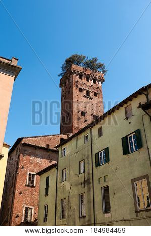 Torre dei Guinigi (Guinigi Tower - 44m - XIV century) in the medieval town of Lucca Toscana (Tuscany) Italy Europe