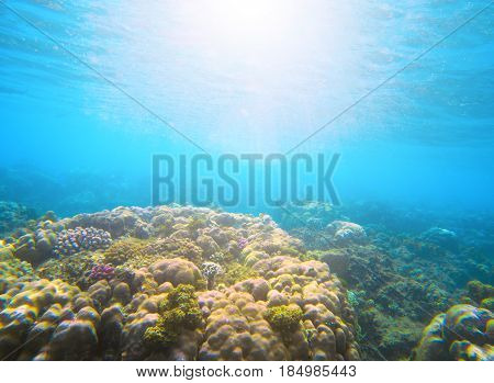Coral reef under sunlight flare in sea water. Deep blue sea perspective view. Marine life with animal and plant. Underwater photo of coral reef in blue tropical lagoon. Snorkeling in tropical seashore