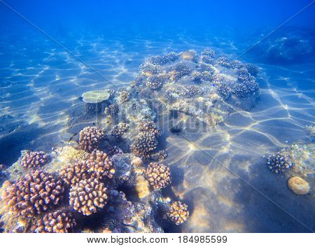 Tropical seashore with young corals. Underwater photo of marine nature. Coral reef and sand sea bottom. Exotic fauna of tropical sea. Beautiful undersea landscape. Summer travel activity snorkeling