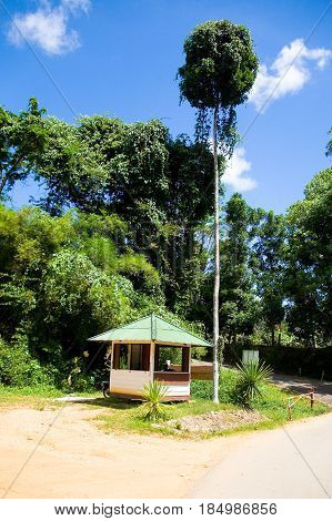 Phuket Thailand February 4 2017: Security booth under a tall slender exotic tree.