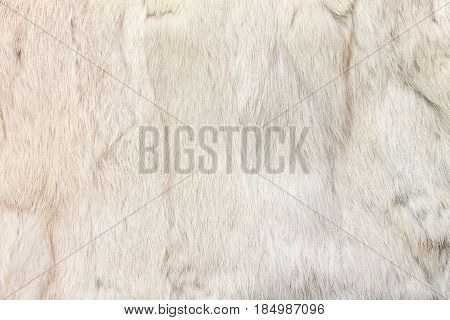 Texture of rabbit fur. The fur is painted in beige color. Natural fur.