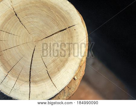 Top view of a tree stump isolated with Radial cracks