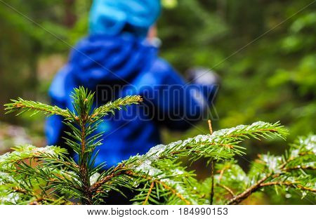 Unrecognizable Boy In Blue Walking Away From A Spruce With Ice On Needles At Winter In A Dark Forest
