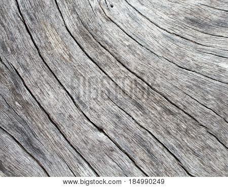 Natural wood background. Pale grey weathered timber closeup. Shabby chic design backdrop. Sea wood board surface. Rustic lumber close-up photo. Timber table with cracks and grit. Wooden structure