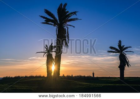 Evening in Porto Portugal. View with palm tress and Felgueiras Lighthouse
