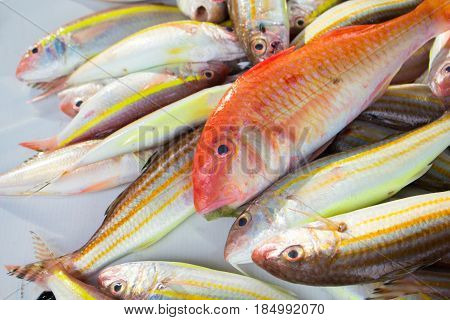 Red and yellow tropical fish catch on fish market table. Striped coral fish for cook. Edible sea animal. Tasty sea fish restaurant menu photo or recipe banner template. Seaside eatery. Seafood market