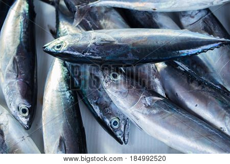 Fresh silver tropical fish catch on fish market table. Oceanic fish for lunch cook. Edible sea animal. Tasty sea fish restaurant menu photo or recipe banner template. Seaside eatery. Seafood market
