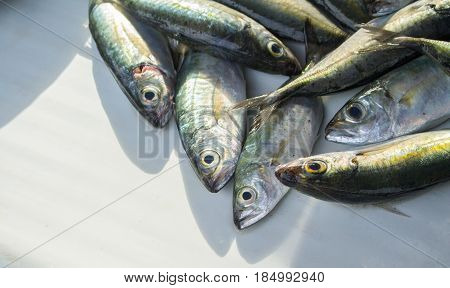 Silver green tropical fish on sunny fish market table. Striped coral fish for cook. Edible sea animal. Tasty sea fish restaurant menu photo or recipe banner template. Seaside eatery. Seafood market