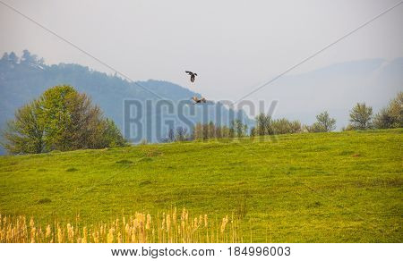 High in Mountains, Spring in Bosnia and Herzegovina