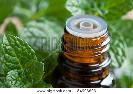 Peppermint Essential Oil - A Bottle With Fresh Peppermint Leaves