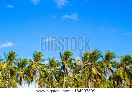 Palm tree line on tropical island. Bright blue sky background. Summer vacation banner template. Fluffy palm tree with green leaves. Coconut palm under sunlight. Exotic nature holiday advertisement