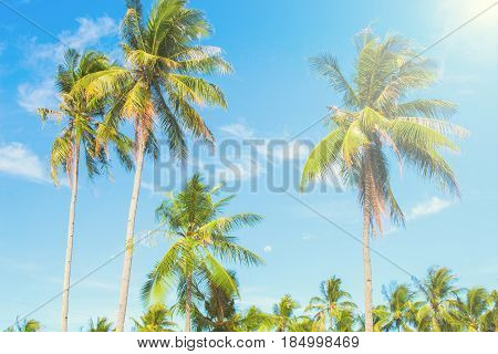 Palm tree in hot air of tropical island. Bright blue sky background. Summer vacation banner template. Fluffy palm tree with green leaves. Coconut palm under sunlight. Exotic nature holiday poster view