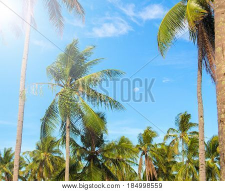 Sunny tropical landscape with coco palm trees. Exotic place view through palm tree silhouettes. Palm trees under sun flare. Peaceful holiday island image for poster or card. Coconut palm leaves banner