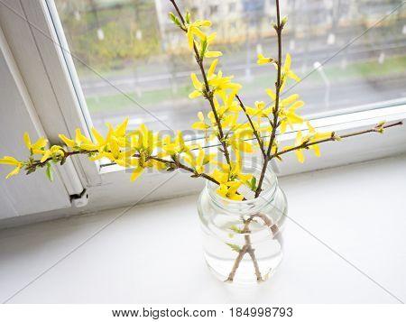 The flower Forsythia object.