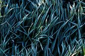 frosty grass blades poster