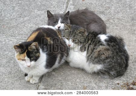 Zonguldak Turkey Cats In The Park In Winter