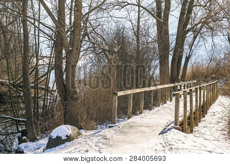 Bridge Into The Forest Nature. Green Forest Stream. Nature. Bridge. Natural Environment. Forest Natu