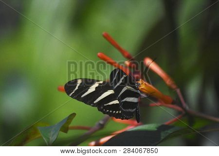 Garden With Flowers And A Striped Longwing Butterfly.
