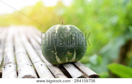 Muskmelon - Green Cantaloupe Thai Melon Harvest From Garden Agriculture Nature Background