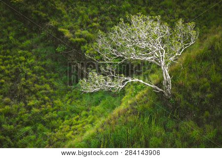 The lone tree among the green grass and bushes. Asian wild nature. The light boundary zone among the different kinds of plants. Picturesque landscape. The top down aerial shot.