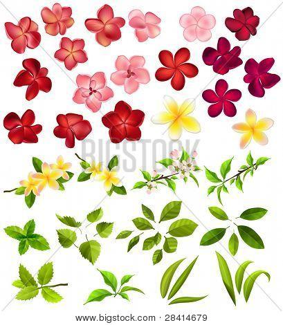 Collection of different flowers and leaves on white. Raster version.