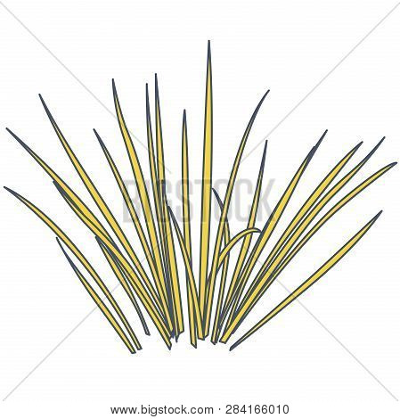 Outlined Vector Isolated Reed. Yellow Water Plants In Different Variant, Isolated On White Backgroun