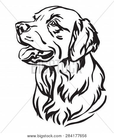 Retriever Images Illustrations Vectors Free
