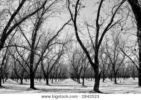 Arizina Winter Orchard