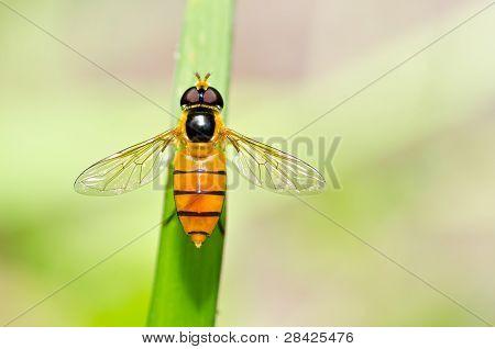 Obst oder Blume Dateien in Grün Natur