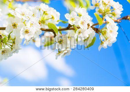 Spring Blossom Background. Japanese Spring Scenics Spring Flowers Spring Background
