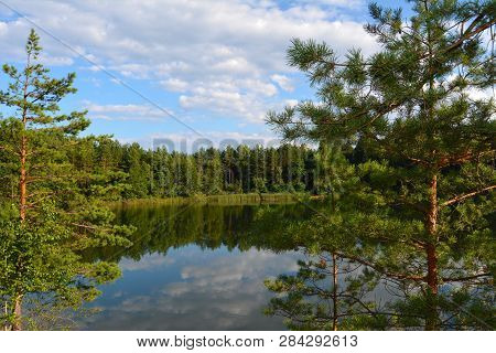 Lake In A Pine Forest. View Of The Lake Through Pine Branches. Blue Lakes In Chernihiv Region, Ukrai