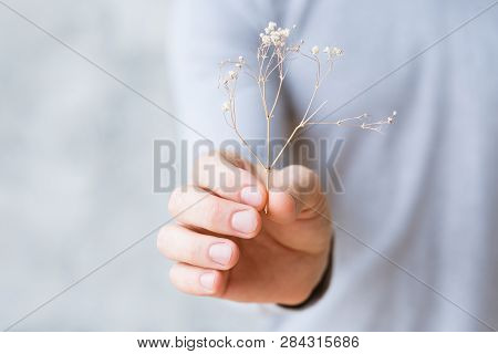Sustainable Development. Nature Protection Concept. Parched Plant In Mans Hand.