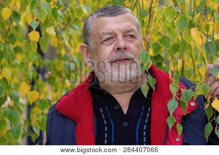 Nice Outdoor Portrait Of Senior Man Against Autumnal Foliage Of Branchy Birch Tree