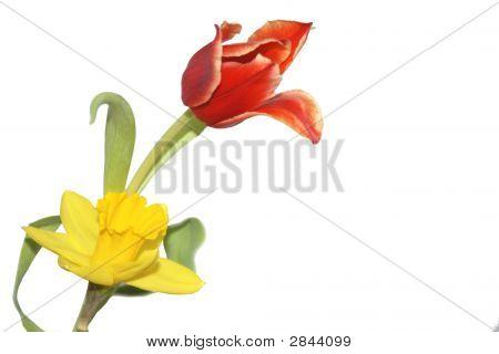 Flowers Of Springtime