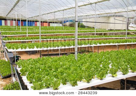 Hydroponic Green House
