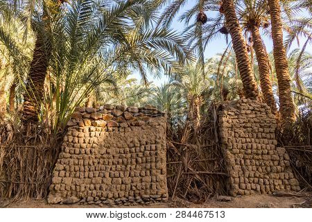 An old traditional building made of clay, thatched walls and adobe bricks in the gardens of date palms near El-Bawiti town, in oasis of Bahariya, Western Desert, Sahara, Egypt. poster