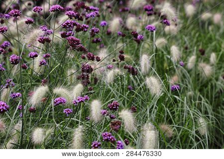 View Of Wild Flowers And Plants On The Summer Meadow. Macro Photography Of Nature.