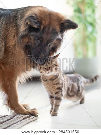 Cat and dog together indoors. Friendship between animals.