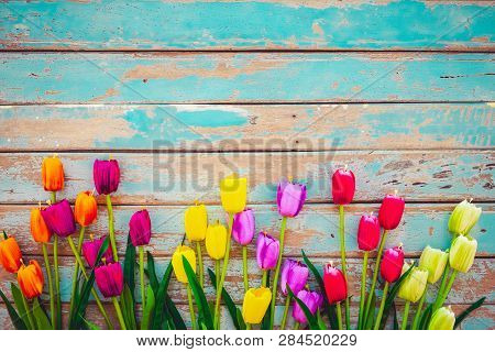 Tulip Blossom Flowers On Vintage Wooden Background, Border  Frame Design. Vintage Color Tone - Conce