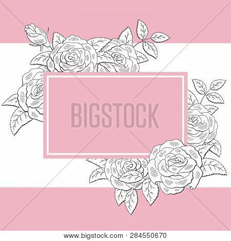 Rose Flower Graphic Bouquet Pink Background Sketch Illustration Vector