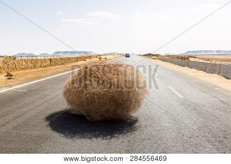 Giant Tumbleweed On The Highway With Sandy Dunes, Between El-bahariya Oasis And Al Farafra Oasis, We