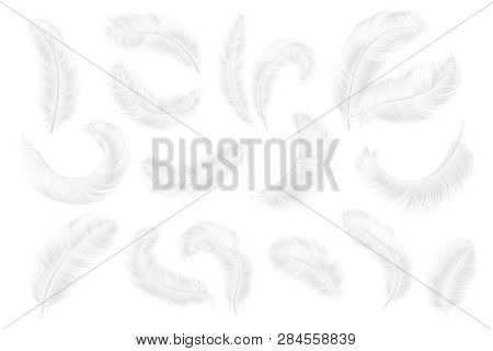 White Feathers. Angel, Goose Or Swan Realistic Feathers. 3d Weightless Falling Plume Isolated Vector