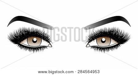 Brown Woman Eyes With Long False Lashes With Eyebrows. Vector Illustration Isolated On White Backgro