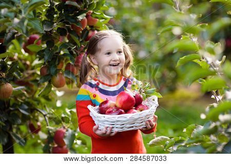 Child Picking Apples On A Farm In Autumn. Little Girl Playing In Apple Tree Orchard. Kids Pick Fruit