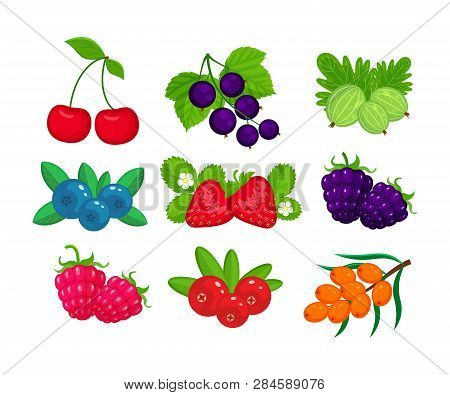 Set Of Garden Berries Vector Illustration Isolated On White Background.